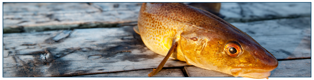 Sam's Baits stockists featured image | a fish on the boardwalk