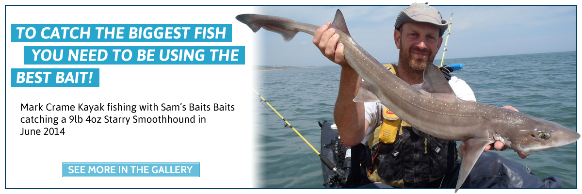 To catch the biggest fish you need to use the best bait! Image of Mark Crame Kayak fishing with Sam's Baits catching a 9lb 4oz Starry Smoothhound in June 2014